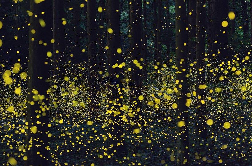 fireflies-long-exposure-photography-2016-japan-18