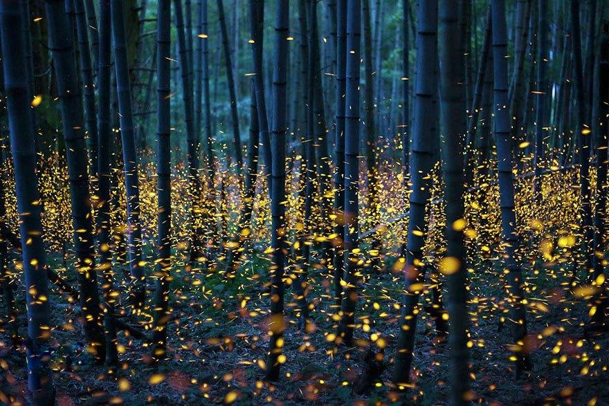 fireflies-long-exposure-photography-2016-japan-19
