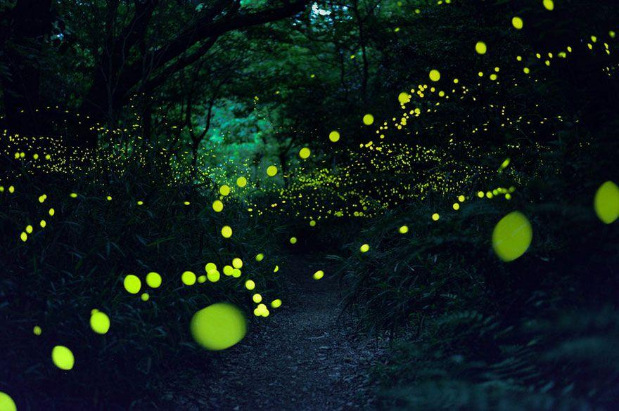 fireflies-long-exposure-photography-2016-japan-8