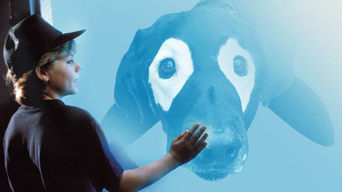 dog-vitiligo-black-labrador-photoshop-battle-23-57a0904c7894d__700