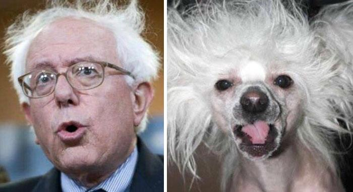humans-look-like-dogs-doppelganger-you-are-dog-now-twitter-14-57a46b046415f__700