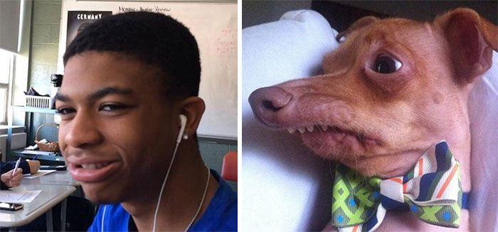 humans-look-like-dogs-doppelganger-you-are-dog-now-twitter-52-57a46b82a9894__700