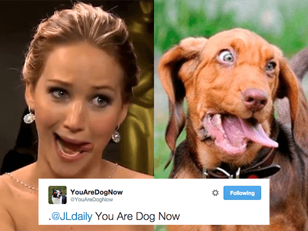 youaredognow-finds-your-doggy-doppelganger-photos-16